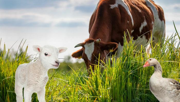 Vi värnar om djur och natur