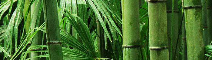 Läs mer om bambu